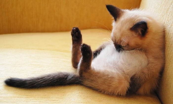 posturas-de-gatos-durmiendos-8