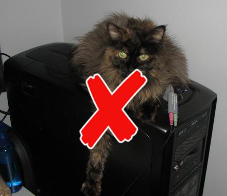 cat and case